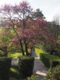 les mimosas ST MARC JAUMEGARDE allées jardin