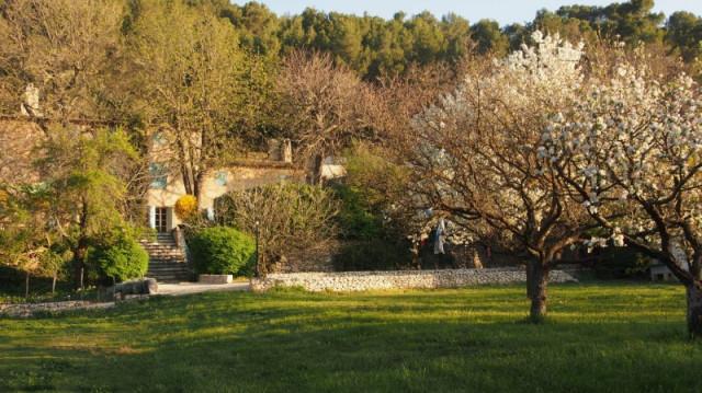 Les Mimosas - Jardin