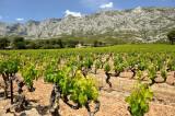Vignes - Côtes de Provence aix en provence office de tourisme centrale de réservation