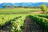 Balade oenologique en Côtes de Provence Sainte Victoire