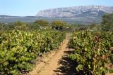 Les vignobles au pays de Cézanne