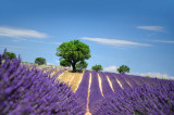 Aix en Provence tourist office  booking center  lavender landscape