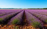 lavender field Aix en Provence tourist office  booking center