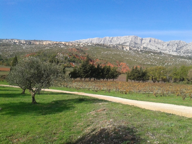 Sainte-Victoire vineyards