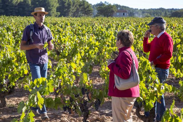 Vignobles des Coteaux d'Aix en Provence