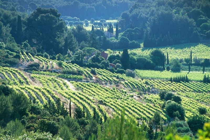 Winetour Bandol-Cassis tourist office booking center  aix en provence