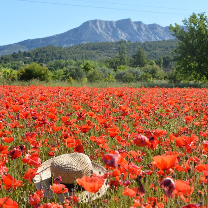 Excursion demi  journée - Dégustation insolite en Provence